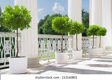 White summer terrace with potted plant near railing. Garden view on sunny day.