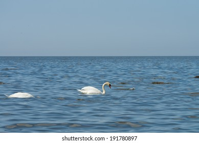 white swan and blue sea