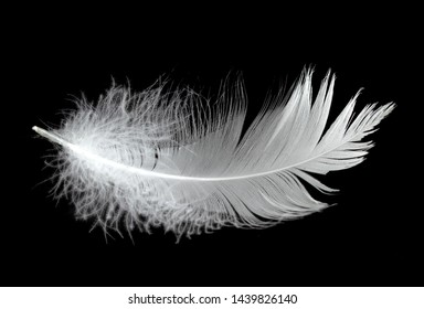 White swan feather on a black background in the air. Abstract white feathers floating in the air.