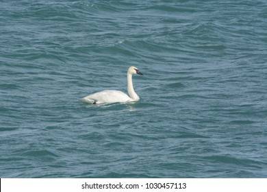 White Swan Lake Ontario