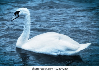 white swan on a water of lake