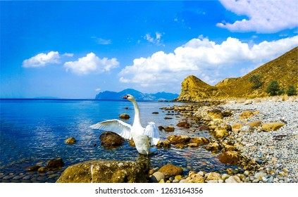 White swan says goodbye on mountain sea shore. White swan on beach. Swan love symbol. White swan