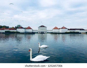 White swans swimming on the lake in front of Nymphenburg Palace, Munich.