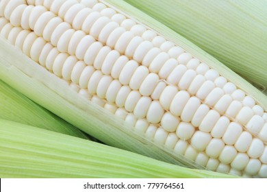 White sweet corn ears background