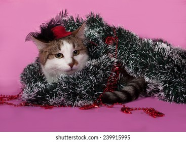 White and tabby cat in Christmas decorations lying on pink background