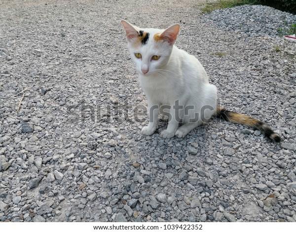 White tabby cat sitting alone on stone