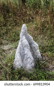 A white termite mounds, ant nests