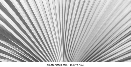 white texture background, a lush White single palm leaf frond.