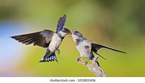 young-student-throated