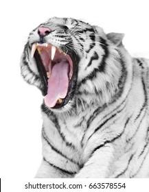 White tiger rage