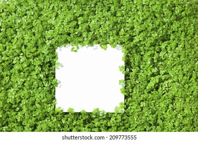 The White Tiles Of Sprout Background
