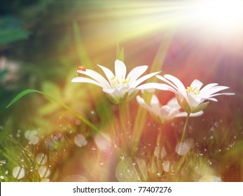white tinny flower under the morning sunlight