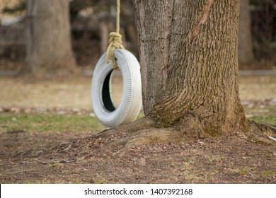 A white tire swing next to a tree on an early spring evening in Collingwood, Ontario