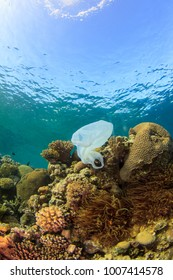 White trash plastic bag on colorful coral reef with anemone