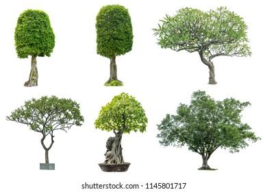 White tree bending  -  Package