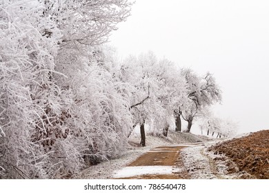 white trees at a country lane