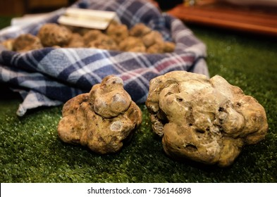 White Truffles (Tuber Magnatum Pico) on a trader stall of the Fiera del Tartufo (Truffle Fair) of Alba, Piedmont (Italy), most important international truffle market in the world