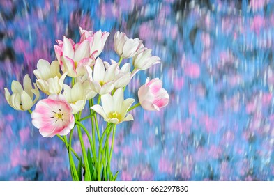 White tulip bouquet on a blurry background