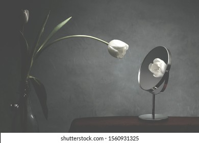 white tulip looking at itself in the mirror