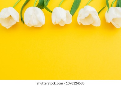 White tulips flowers on yellow background. Flat lay, top view. Floral frame background.