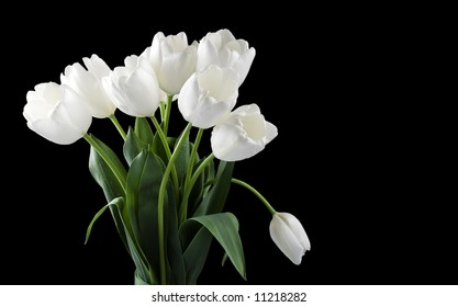 White tulips isolated on black background