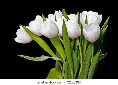 white tulips isolated on black