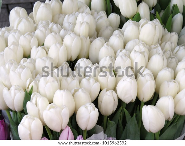 White tulips at market in the Netherlands