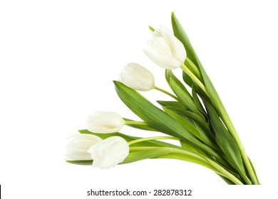 White tulips on white background