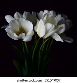 Tulip On Black Background Images Stock Photos Vectors Shutterstock