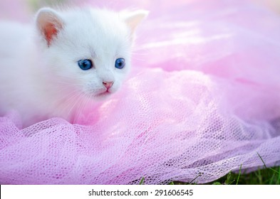 white two kitten on the pink background with flower