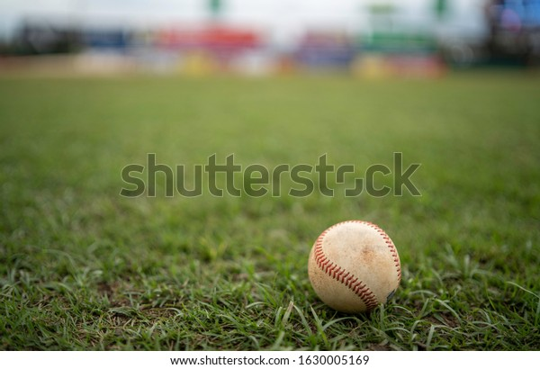 White used baseball ball on the fresh green grass of an stadium with copy space.