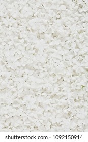 white viburnum flower background or naturel organic texture