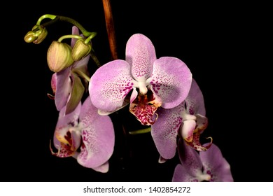 White and violet orchid flower