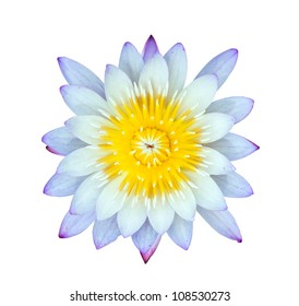 White and violet water lily isolated on white