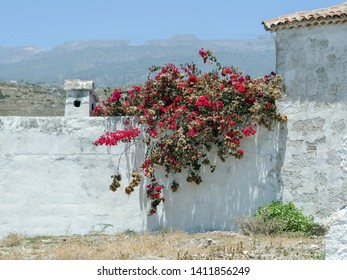 a white wall is covered with a dark red bougainvillea, next to it a small section of a white house wall and in the distance delicately a mountain landscape. White atmosphere, Lichly flooded,