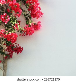 White wall and tree with red flowers