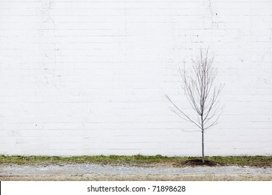 white wall & young tree