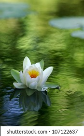white water lily floating on a wavy water
