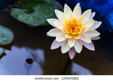 White water lily lotus Spring Green backgrounds