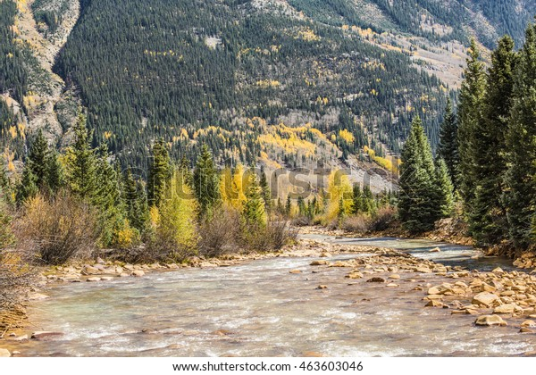 White water Mineral Creek stream in Colorado, USA during the fall with golden aspens