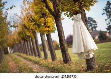 White Wedding dress hanging on a maple tree