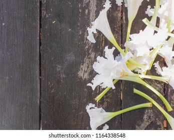 white wild flowers caches placed on wooden boards.