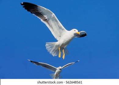 White wild flying sea birds in the blue sky