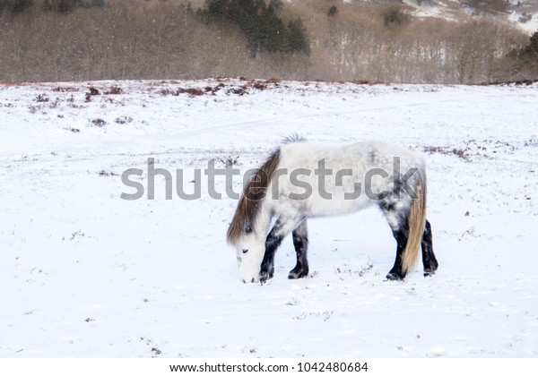 white wilde horse in winter landscape with snow