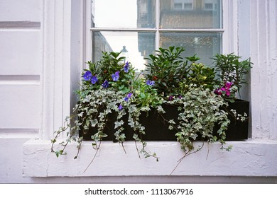 White window box decorated with colorful flower pots