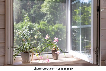 White window with mosquito net in a rustic wooden house overlooking the garden. Houseplants and a watering can on the windowsill.