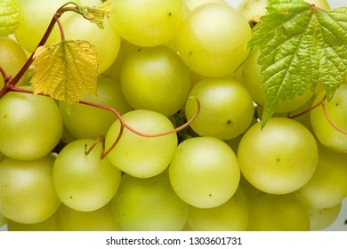 White wine grape cluster with leaves macro