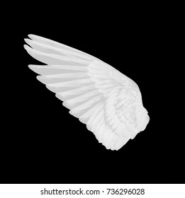 white wing of bird on white background