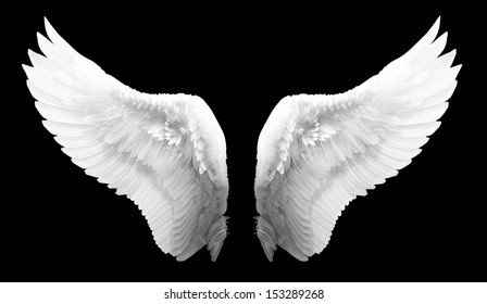 white wing isolated - Shutterstock ID 153289268