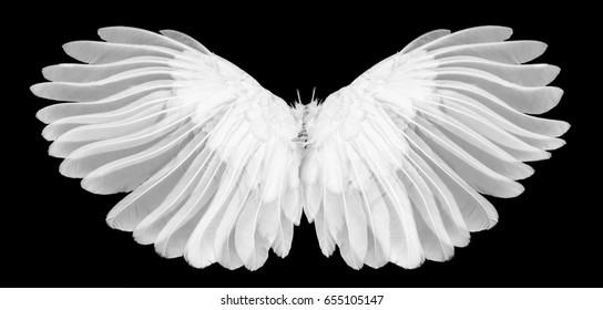 white wing isolated